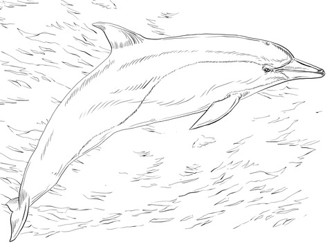 dolphin coloring lesson  coloring pages for kids